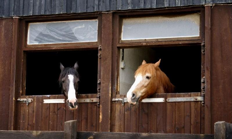 Система вентиляции для конюшни