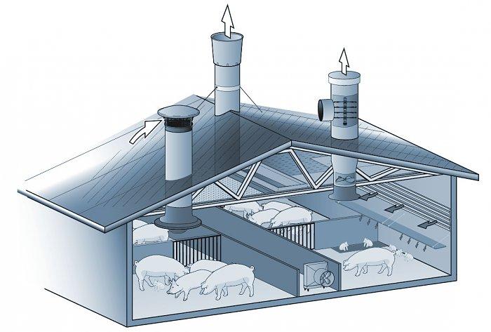 ventilation pigsty